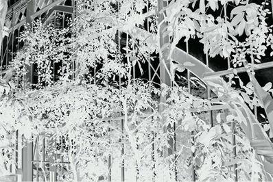 Penelope Stewart, 'Vitres 1', 2014