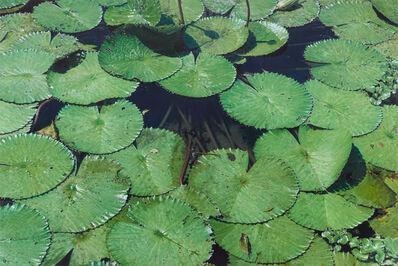 Chia-Ning Huang, 'Leaves of Water Lilies', 2020