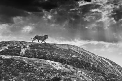 David Yarrow, 'Rock Star', 2016