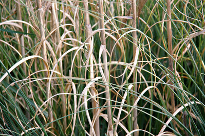 Lekha Singh, 'Weeds 8'