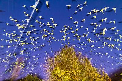 Yoshinori Mizutani, 'Tokyo Parrots 003', 2013