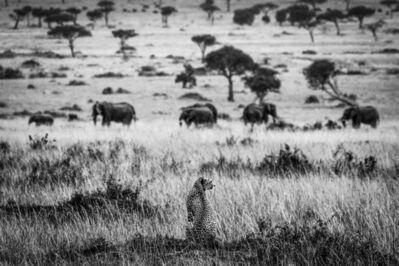 Christoph Tänzer, 'Guardian of the Mara', 2017
