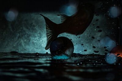 Ergys Zhabjaku, 'Fish Tank', 2019
