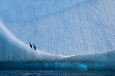 Paul Nicklen, 'Home Ice Advantage', 2006