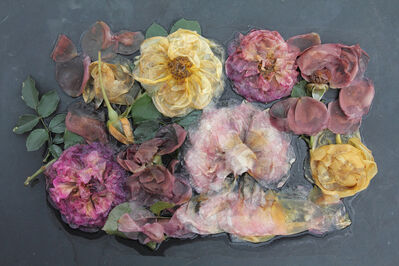 Mary Kocol, 'Rose Plate Variety (from the Ghost Garden Series)', 2013