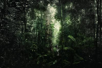 Robert Zhao Renhui, 'Alstonia Pneumatophora, Nee Soon Swamp Forest. Tony O'Dempsey, 54, amateur conservationist and activist.', 2015