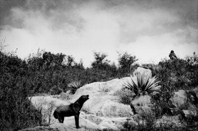 Matt Black, 'A shepherd's dog in the hills above town. Santiago Mitlatongo, Mexico.', 2011