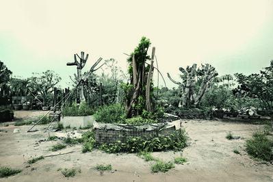 Robert Zhao Renhui, 'Substation Malayan Banyan ', 2015