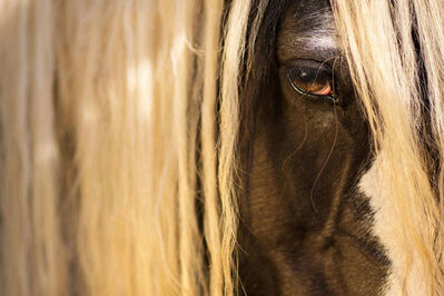 Raphael Macek, 'Equine Beauty #13', 2017