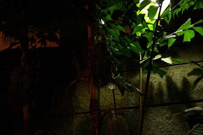 Susanne M. Winterling, 'Licht im Taschenpark (Light in the Pocket Park)', 2014