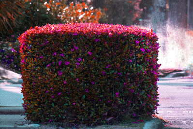 Robert Funk, 'Hedge Fun - Palm Beach in Magenta with Lizard - Street Art by the Rich', 2021