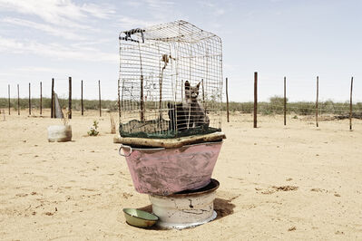Margaret Courtney-Clarke, 'Caged Cats, Axab Pan, Kalahari, Namibia', 2019