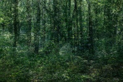 Kim Boske, 'A Forest', 2019