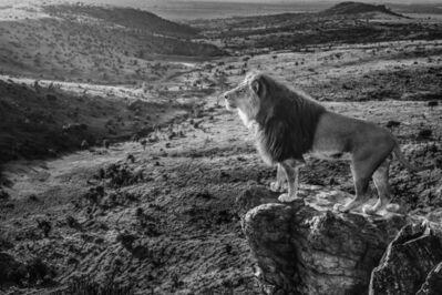 David Yarrow, 'Pride Rock ', 2019