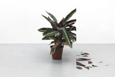 Igor Eskinja, 'Plant 1', 2018