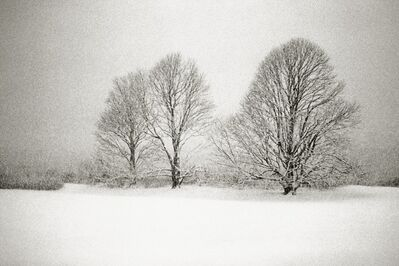 Priscilla Rattazzi, 'Three Lindens in a Snowstorm, East Hampton', 1996