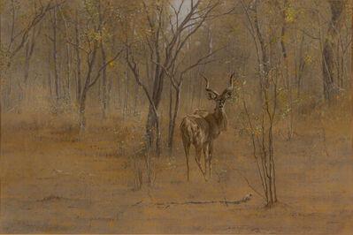 Kim Donaldson, 'Young Kudu Bull'