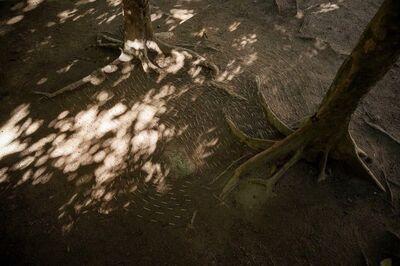 Maria Laet, 'Terra (Parque Lage)', 2015