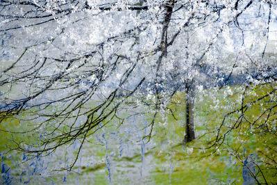 Valda Bailey, 'Blossom Blizzard', 2012-2019