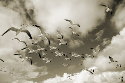 Debranne Cingari, 'In Flight I', 2013
