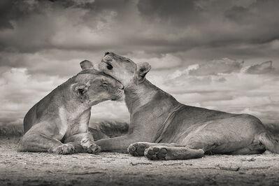 David Burdeny, 'One Love, Serengeti, Tanzania', 2020