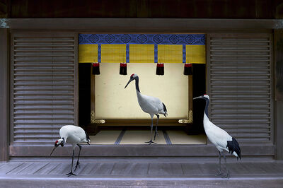 Karen Knorr, 'Path To Enlightenment, Meiji, Jingu Shrine Tokyo', 2015