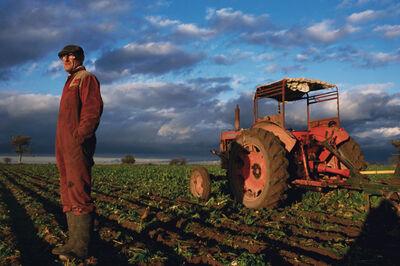 Justin Partyka, 'Sugar Beet Harvest, Norfolk', 2004