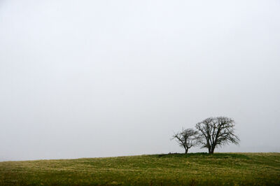 michael rababy, 'Tree - Northern California, 2013', 2013