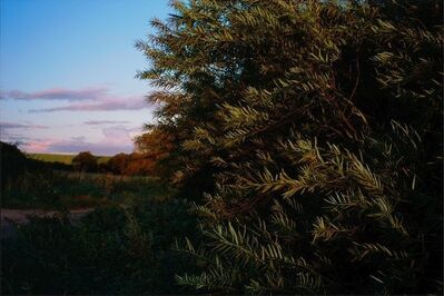 Justin Partyka, 'Osier Willow, Norfolk', 2012