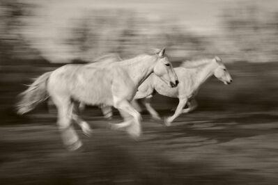 Sarah Corbin, 'White Horse Blur'