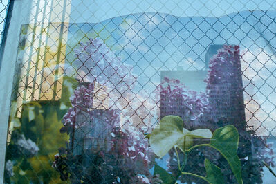 Rebecca Norris Webb, 'Lilac Festival Scrim, Rochester, New York', 2013
