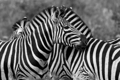 Araquém Alcântara, 'Zebras, Tanzania, Africa (Black and White Photography)', 2012