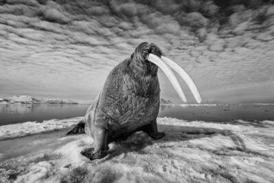 Paul Nicklen, 'Ice Walker', 2008