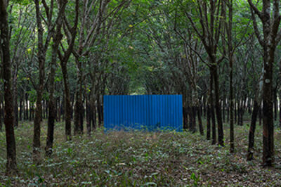 Lim Sokchanlina, 'Rubber Plantation, Kampong Cham Province', 2018