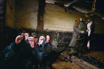 Justin Partyka, 'Turkey Plucking, Norfolk', 2004