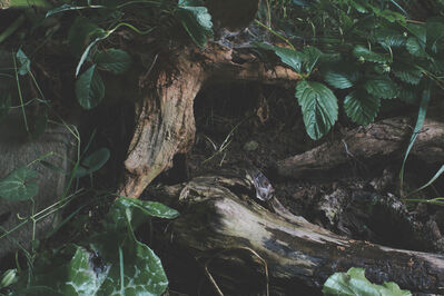 """Sharon Core, 'Untitled #13, from the series """"Understory"""" ', 2015"""