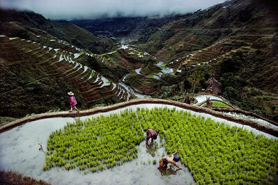 Steve McCurry, 'Banaue Rice Terraces', 1985