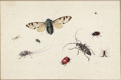 Johannes Bronckhorst, 'Studies of a cicada, a cereal-leaf beetle (Oulema melanopus), a harlequin ladybird (?), a spiny orb-weaver spider, an Asian longhorn beetle, a (red) rhinoceros beetle, a rosemary beetle, another longhorn beetle and a stick insect', ca. third quarter seventeenth century