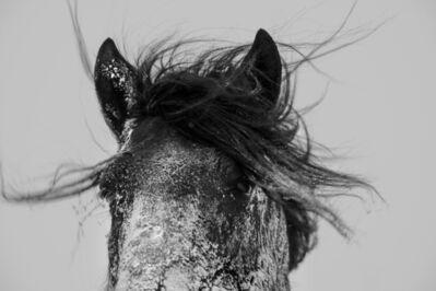 A Yin, 'Spirit of Mongolian Horses #8', 2015
