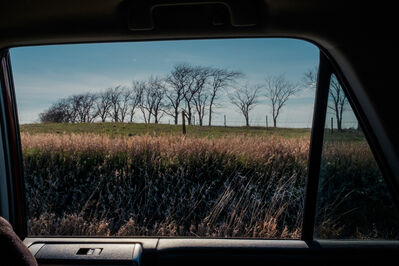 George Nobechi, 'Trees on the Great Plains', 2017