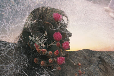 The Family Acid, 'Mary, Queen of the Cactus, April', 1986