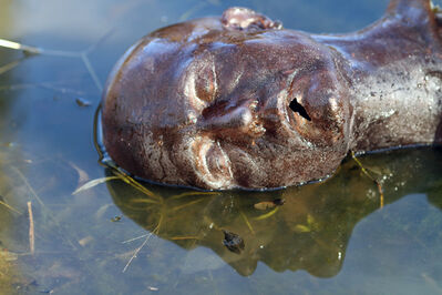 Dana Hoey, 'Brown Head in Water', 2012