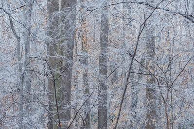 Peter Essick, 'Ice Storm, Fernbank Forest, January 7, 2017', 2019