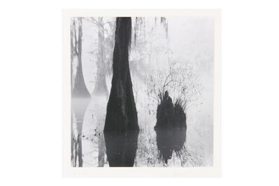 David H. Gibson, 'Button Bush Stump, Mill Pond, Caddo Lake, Texas', 1988