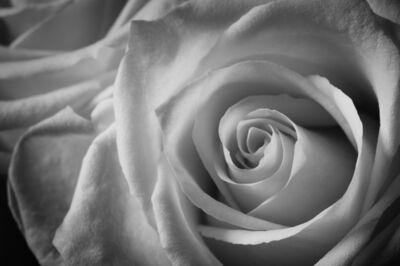 Indira Cesarine, 'Rose Blanche No. 1', 2020