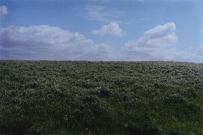 Samuel Laurence Cunnane, 'Field', 2015