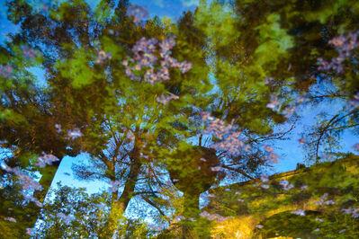 Rachel Berkowitz, 'Reflections No. 2 - Contemporary Digital Photograph ', 2020