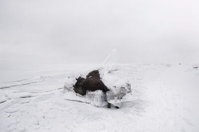 Robert Zhao Renhui, 'Elephant Island (from the series, the Blind)', 2010