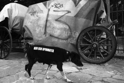 Santiago Sierra, 'The Athenian Dogs', 2015