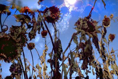 Peter Fischli & David Weiss, 'Ohne Titel/Untitled (Blumen 2/20)', 1997